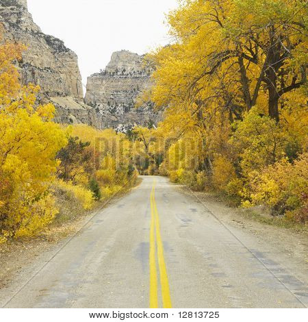 Country road leading to mountain range with yellow Aspen trees on both sides.