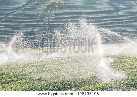 The water sprinkler in green tea plantations.