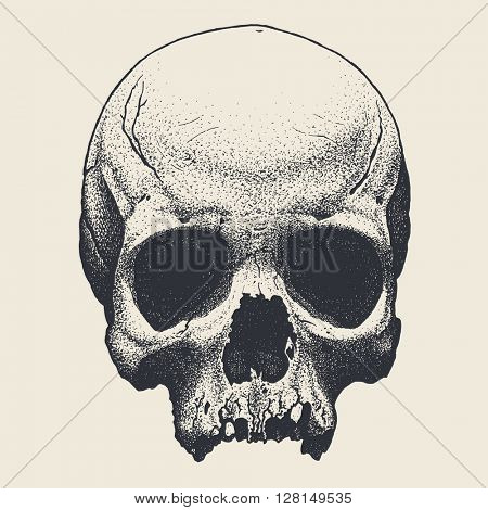 Vector hand drawn skull