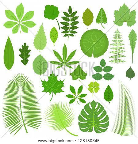 Leaves set vector illustration.
