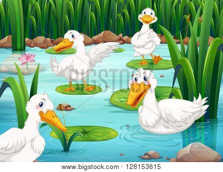 Four ducks living in the pond illustration