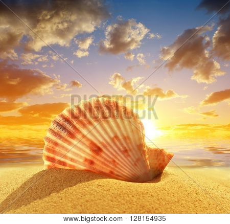 Sea shell on beach in the sunset