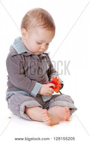 Small baby holding orange flower. Isolated on white