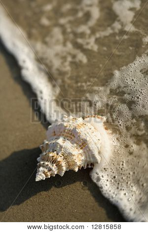 Close-up of conch shell with wave engulfing it.