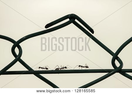 Silhouette of three ants marching on a wire of a fence two to left and one to right. ** Note: Soft Focus at 100%, best at smaller sizes