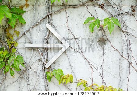 Arrow over ivy leaves background