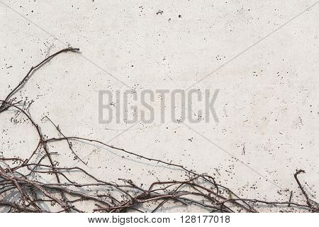 Wall with plant leaves, background with copyspace