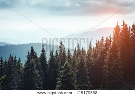 Magic view on the mysterious woods glowing by sunlight. Dramatic scene and picturesque picture. Location place Carpathian, Ukraine, Europe. Beauty world. Retro, vintage style. Instagram toning effect
