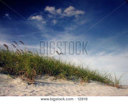 Florida Dune
