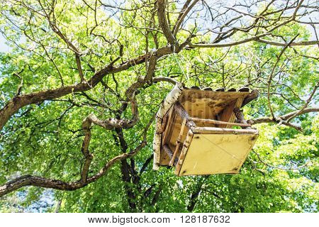 Wooden bird house hanging on the green tree. Seasonal natural scene. Beauty in nature. Ornithology theme. View from the bottom up.