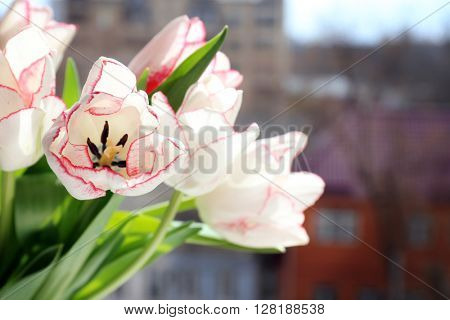 Bouquet of tulips on city blurred background