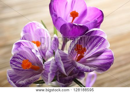 Beautiful crocus flowers in glass vase on wooden table closeup