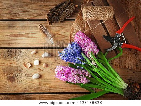 Hyacinth and garden tools on wooden background