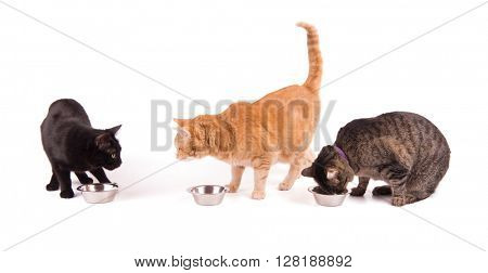 Three cats with food bowls, one eating and two looking at each other, on white