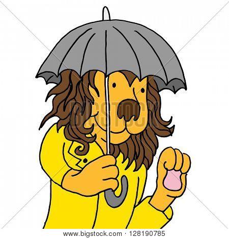 An image of a lion using umbrella.