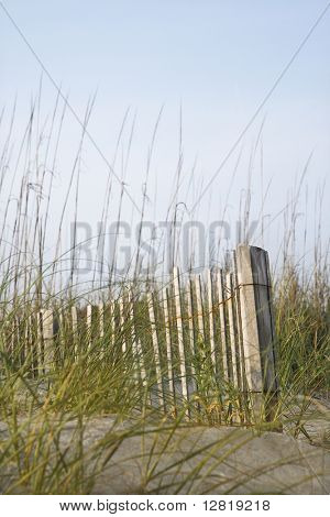 Weathered wooden fence with beach grass on Bald Head Island, North Carolina.