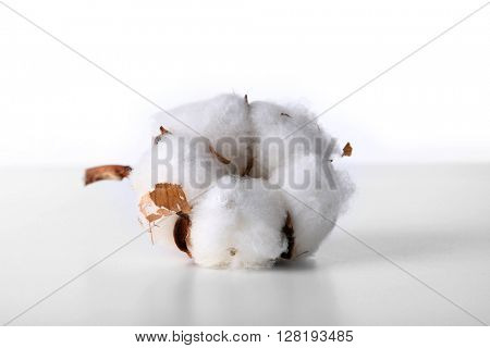 Cotton flower isolated on white