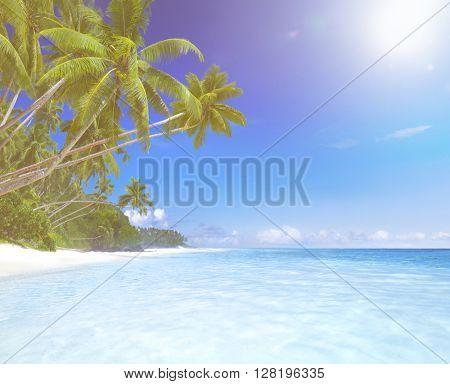 Tropical Paradise Concept