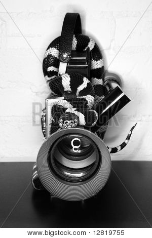 California Kingsnake wrapped around old movie camera.