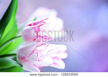 Bouquet of tulips on blurred background
