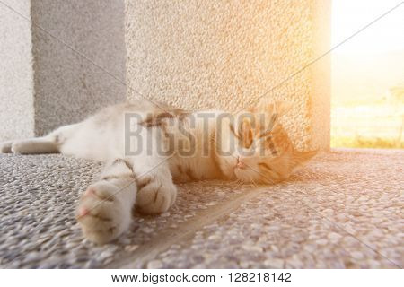 Adorable kitty laying on ground in the outdoor.