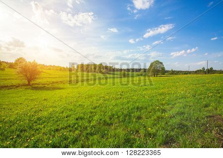 Green field with flowers under blue cloudy sky