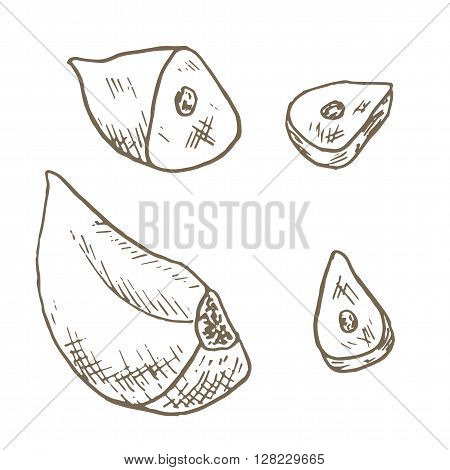 Garlic clove set. Sketch garlic clove sliced. Hand drawn garlic clove and slice. Vector garlic clove illustration. Cut organik vegetable set. Vegetarian and vegan food.