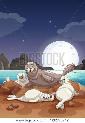 Seals living by the sea at night illustration