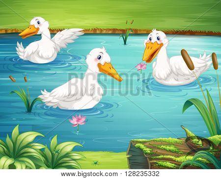 Three ducks swimming in the pond illustration