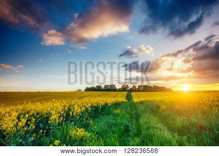 Fantastic views of the green grass and canola field glowing by sunlight. Dramatic picture and picturesque scene. Location place Ukraine, Europe. Artistic picture. Beauty world. Soft filter effect.
