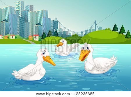 Three ducks swimming in the lake illustration