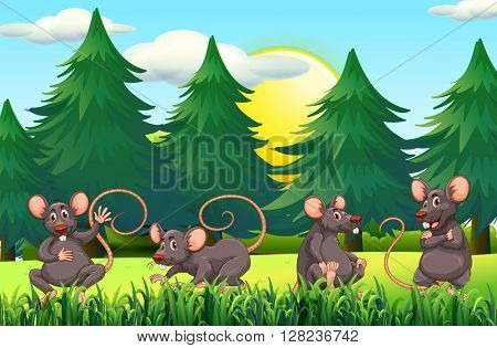 Four rats in the field illustration