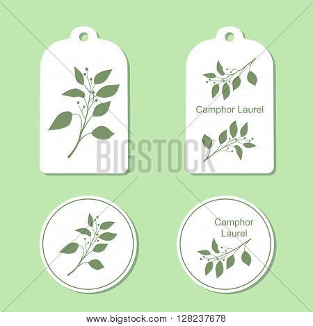 Camphor laurel branch. Green silhouette of Camphor laurel. Vector illustration. Tags and Labels