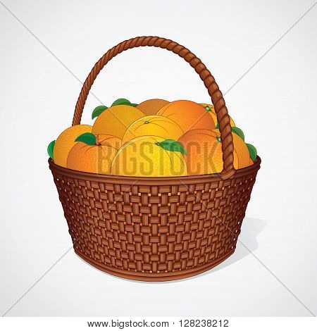 Fresh Oranges with Leaves in Wicker Basket. Vector Image
