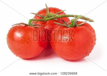 branch of three tomatoes with water droplets  isolated on white background.
