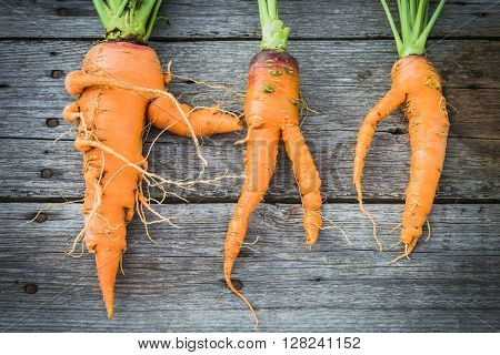Trendy ugly organic carrot from home garden on barn wood table australian grown