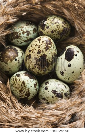 Speckled eggs in nest.