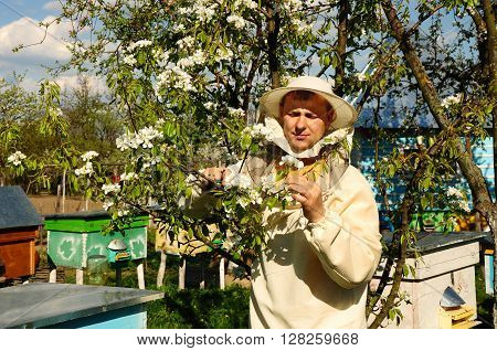 beekeeper inspects blossom trees, apiary, hives, honey, Bees