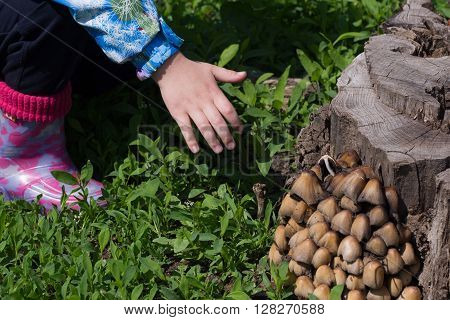 Child Hand Wants To Thwart Poisonous Mushroom