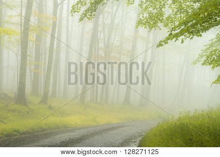An unpaved road leads through a foggy forest in the high lands of West Virginia.