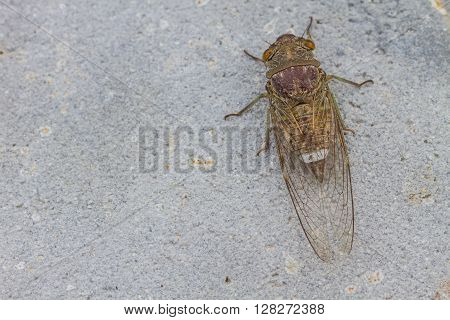 Cicadas in the ground close up insect from nature