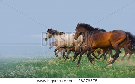 Herd of horses runs gallop on the field on a background cloudy sky