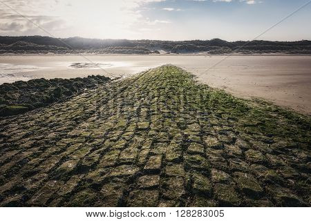 Stones overgrown with algae on the beach. The North Sea the Netherlands.