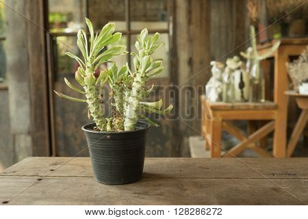 Small plant cactus and desert flora in glass flower pot on wooden table and garden background in warm tone/Small plant in flower pot in warm tone