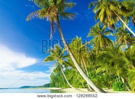 Exotic Paradise Relaxation In Peace