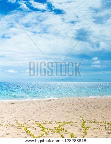 Scene Beach Splashing