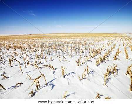 Desolate snow covered corn field in the Midwestern, USA.
