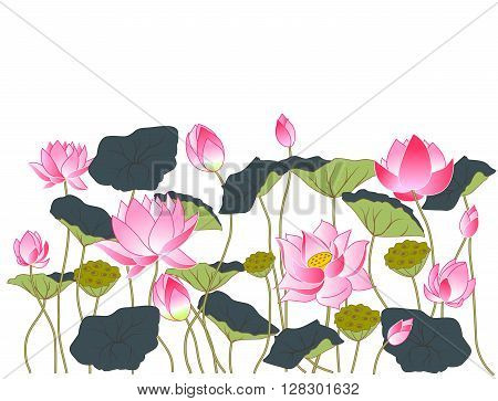 pink flowers and lotus leaves vector illustration