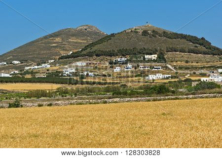 Wheat fields near town of Parikia, Paros island, Cyclades, Greece