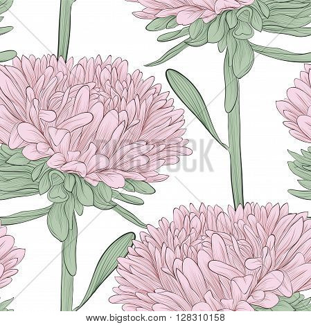 Beautiful seamless background with pink flowers aster on a white background. Hand-drawn contour lines and strokes. Perfect for background greeting cards and invitations of the wedding birthday